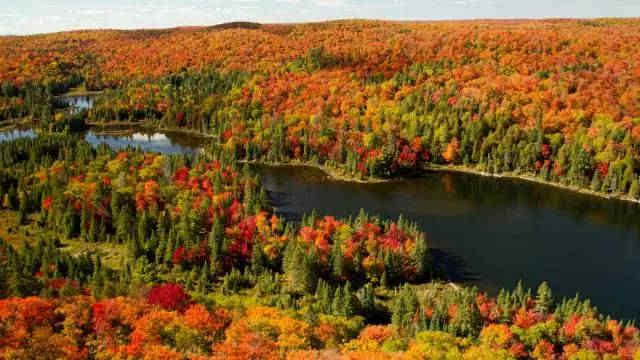 加拿大的秋天便是它最红的季节,漫山遍野,层林尽染,是枫叶之国一年之图片
