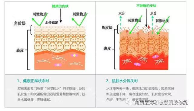 """""""砖墙结构"""",其表面附有""""皮脂膜"""",由此共同形成了一道人体天然保护屏障"""