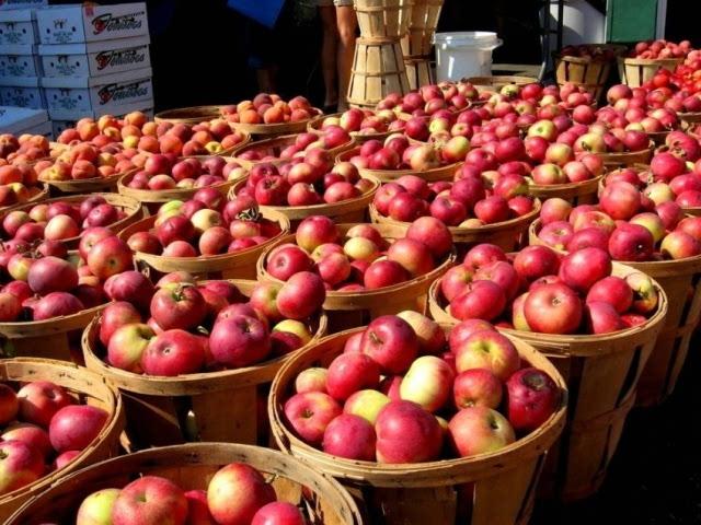 苹果6日本卖多少钱_保证苹果内外部的品质和风味,日本苹果从储藏到运输再到批发后进入