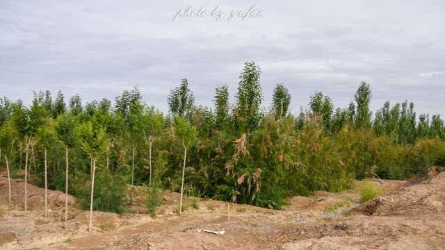 柴达木盆地的奇迹之城,戈壁滩上的生命绿洲