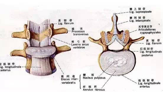 颈椎解剖全解,不容错过