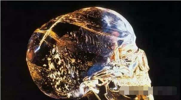 头颅组织解剖结构图