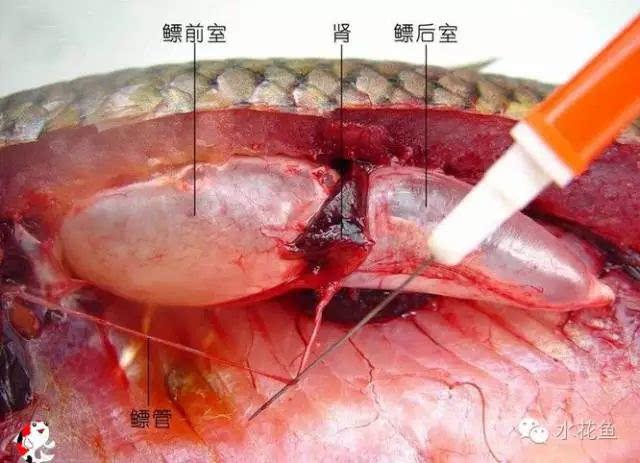5.血液循环图片