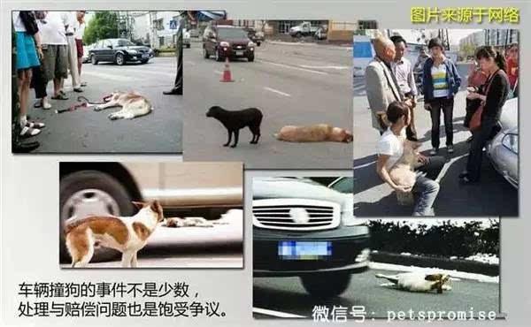开车路上撞到狗一定要赔偿吗?不看以后吃大亏