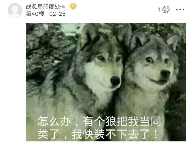 哈士奇混入狼群当狼王,还娶了母狼生了娃!