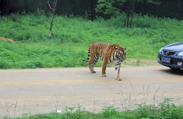秦皇岛野生动物园:近距离接触呆萌的小动物
