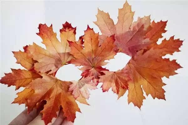 100种幼儿园秋季创意手工+主题环创+树叶粘贴画!图片