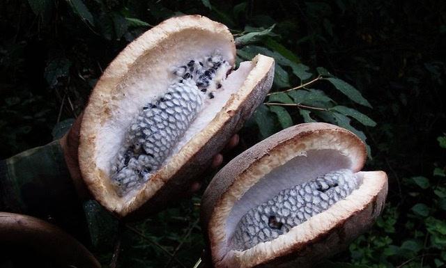 随州农村人必吃的8种野果, 只有70后和80后才知道.图片