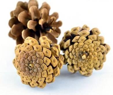 例如:树枝树叶,尤其是树枝,各种各样的树枝我们可以打造各种各样的垂