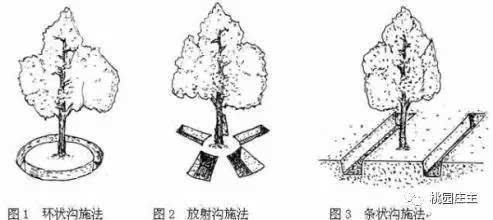 桃树李子手绘线稿