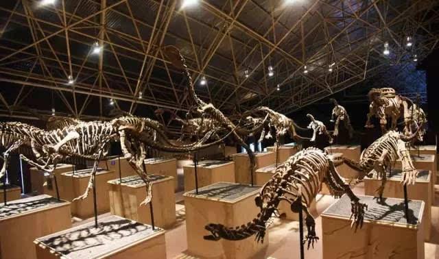 恐龙文化旅游主题公园 60余具高度完整的恐龙骨骼化石展示在内 规模图片