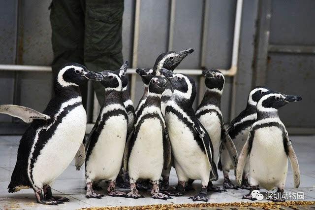 深圳野生动物园双重优惠来报到!