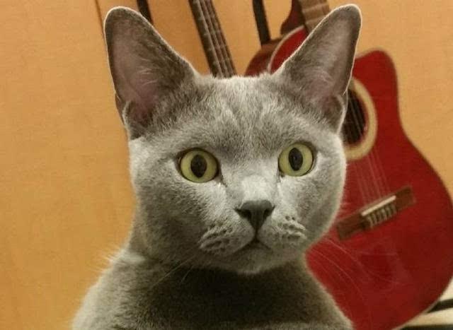 猫咪睡觉时露出羞处,主人好奇摸了一下,接下来的猫表情网友笑喷图片