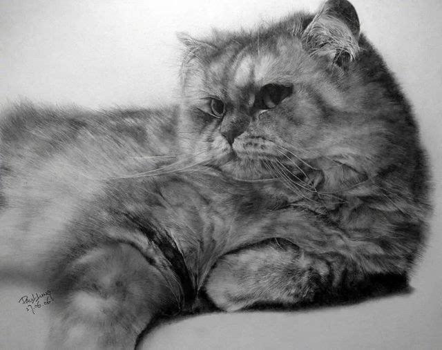 猫咪铅笔素描画,快来吸猫吧