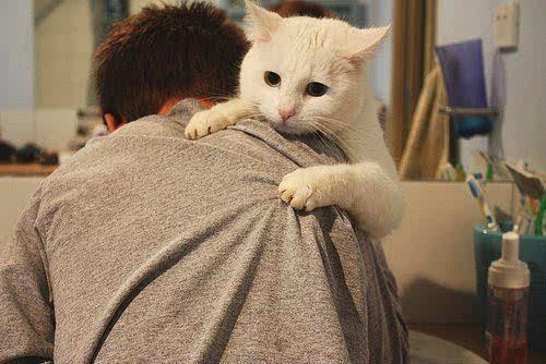 一个喜欢猫的男人_如果你的男朋友是个爱猫的人,那就要恭喜你,获得一个自律自爱阳光又
