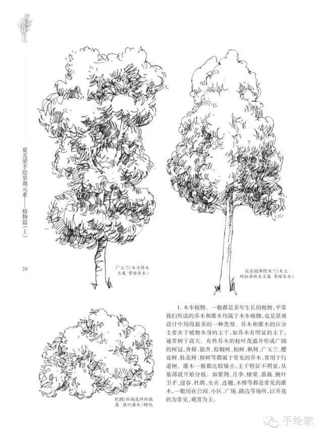 来源《夏克梁手绘·景观元素·植物篇(上)》 如有侵权,请联系小编