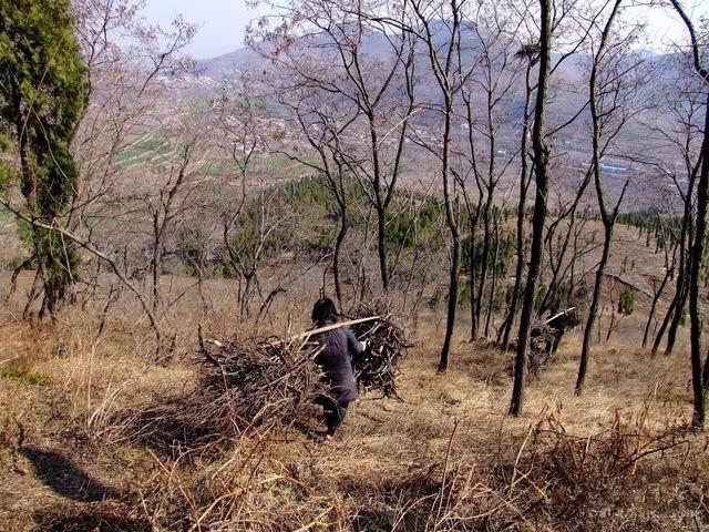 小时候湖口步骤一起分山割柴的经历.设备管理农村图片