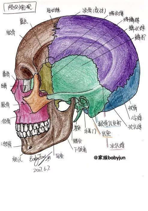 女患者手绘24张医学美图,向医生医学致敬!