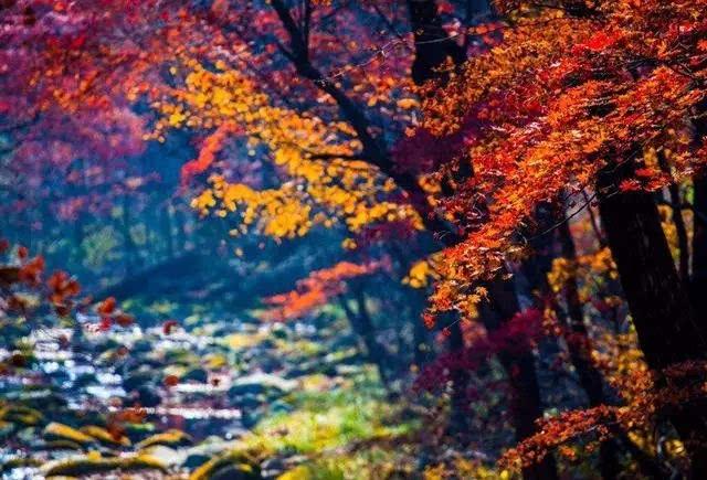 吉林 红叶谷 在吉林蛟河红叶谷观赏红叶最好的季节,是每年秋天的9月图片