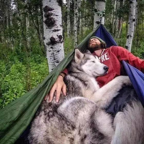 梦想| 那些爱探险的小动物们,如今都走遍了世界,而你呢?