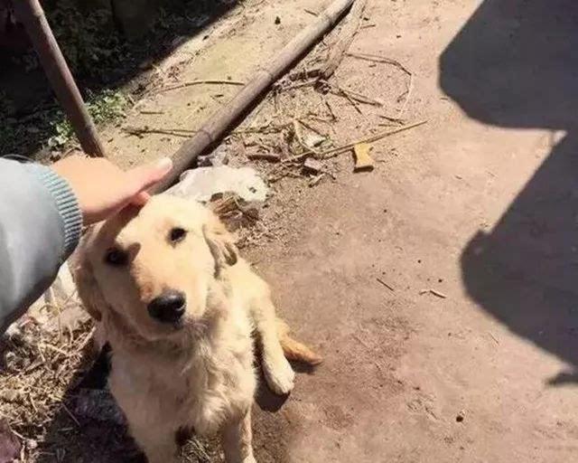 当你撸其他狗子时,它可能就在你背后像这样盯着你