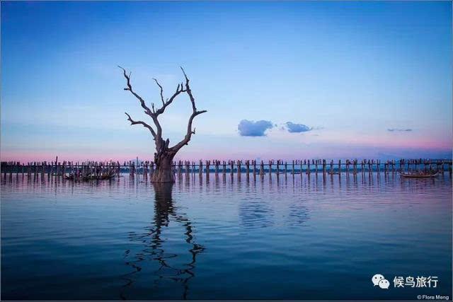 作者分享:缅甸乌本桥和孤独树的日落