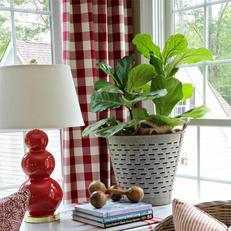 """青苹果竹芋会开花吗_""""幸福树""""听过吗,放一盆在家里,改善室内空气还驱蚊防虫 ..."""