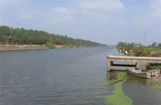 自制夏天钓鲤鱼的窝料和饵料配方,钓获四十斤鲤鱼