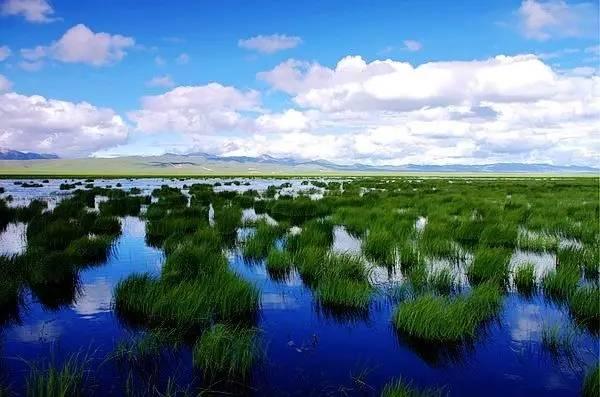 绚丽甘肃|花湖·热尔大坝草原上的3颗明珠