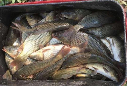 分享钓大鱼的花生饵料配方及使用技巧,真的很好用