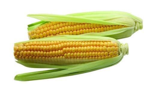 分享自制玉米粒玉米面饵料配方,好用实惠