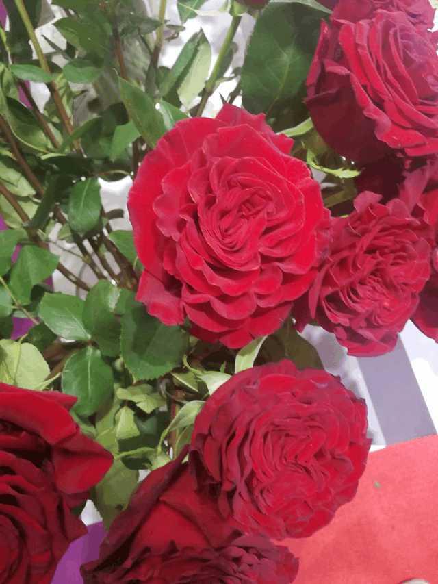 鲜花、永生花、干花、皂花、PE花有什么不一样的?