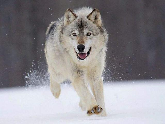 给狗做绝育的利弊有哪些?一般做绝育是狗多大的什么时候?