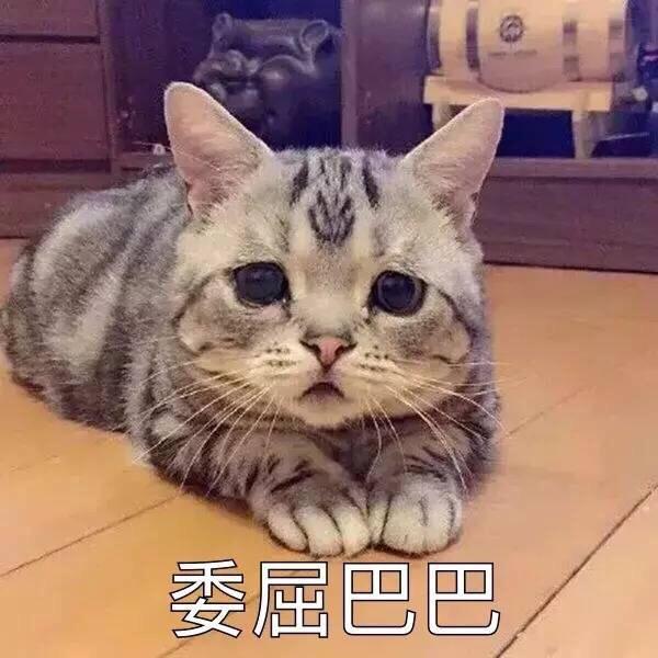猫狗流泪到底是情感所致,还是眼疾导致?