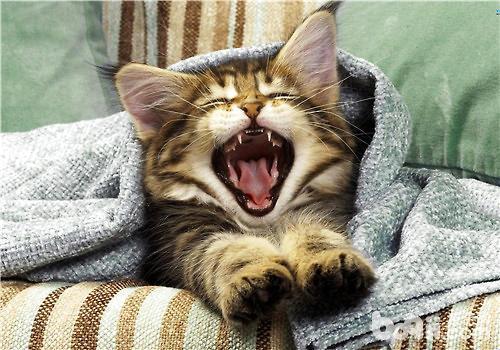 猫咪有咬人的坏习惯,怎么办?