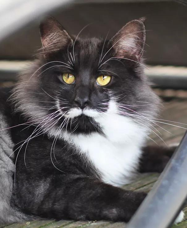 你见过猫咪身上什么特别的花纹吗?