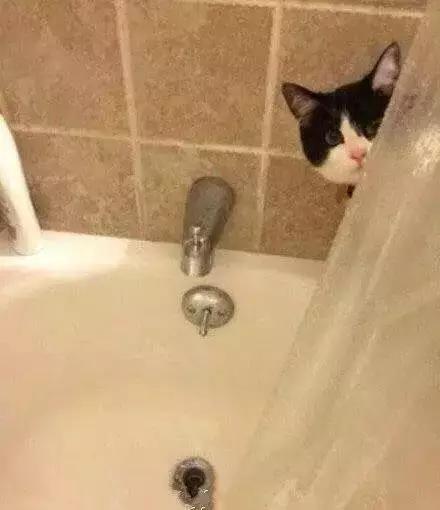 猫看见主人洗澡为什么总是守着门口叫个不停?