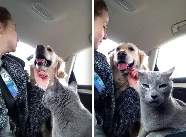 同时养狗狗和猫咪,会是一种什么样的体验?