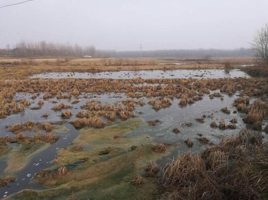 桐柏鸿华牧业(养猪场)污染触目惊心环保局在干啥?