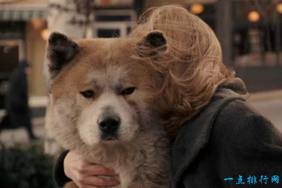 动物电影十大排行榜_绝对不可错过的影史十大动物电影推荐