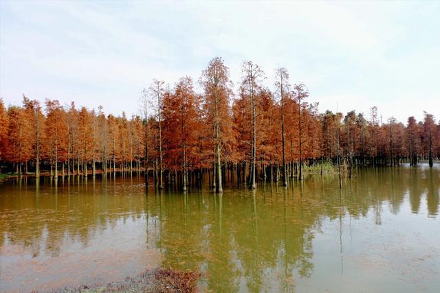 上海淀山湖森林公园_这个假期必去的上海12大森林/郊野公园!