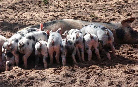 农村养殖业_明年农村种植养殖业前景分错,错过赚不到钱!