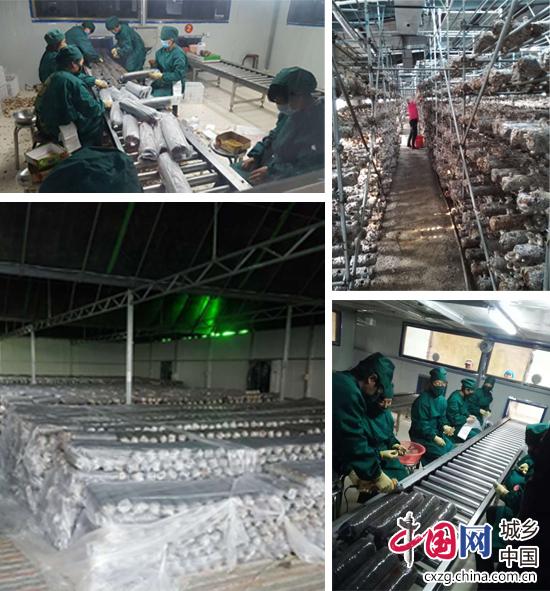 涞源龙海明:全力打造绿色有机品牌