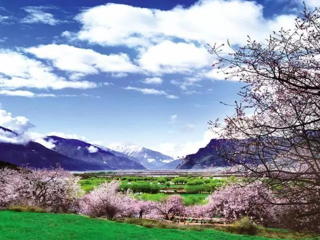 林芝八一镇海拔_行摄西藏—雪域桃花之拉萨林芝、雅鲁藏布大峡谷、南迦巴瓦 ...