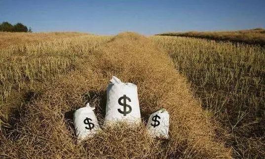 农村金融,一场九死一生的游戏?插图