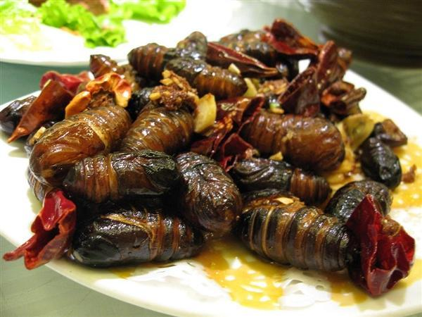 东北蚕蛹带到海南当下酒菜:竟变成蛾子飞了的照片 - 2