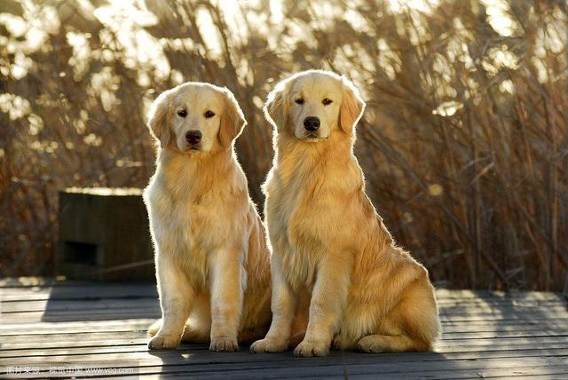 狗狗跟人年龄的换算,你家毛孩几岁呢? (图9)