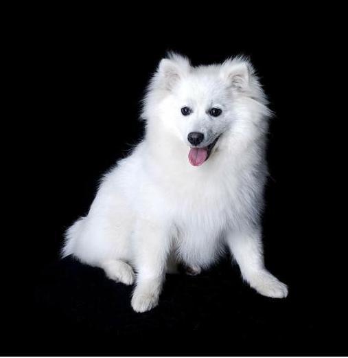 狗狗跟人年龄的换算,你家毛孩几岁呢? (图5)
