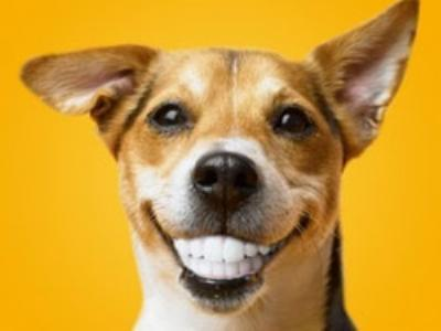 狗狗跟人年龄的换算,你家毛孩几岁呢? (图8)