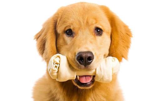 狗狗跟人年龄的换算,你家毛孩几岁呢? (图7)